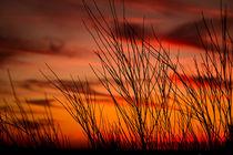 Orange sky with branches von Gema Ibarra