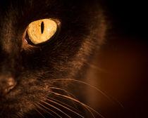 Portrait black cat von Gema Ibarra