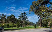 Golden Gate Park by John Bailey