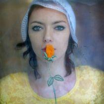 Rose by Dariusz Klimczak