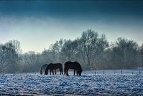 Pferde im Schnee by Viktor Peschel