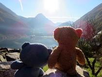 Zwei Teddybären im norwegischen Sonnenlicht von Olga Sander