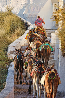 A Guide mule in Santorini, Greece by Constantinos Iliopoulos