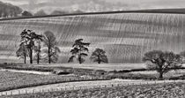 ' Fields and trees' von Pete Hemington