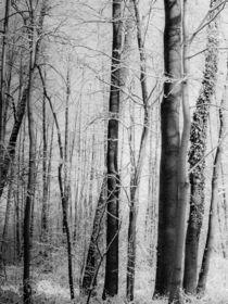 Frozen wood by Daniele Ferrari
