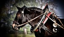 Noriker Pferd von Regina Thyssen