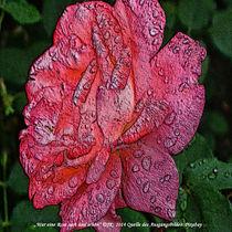 War eine Rose, zart und schön von Jürgen Kohl