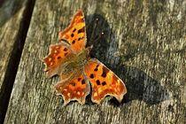 Butterfly von leddermann