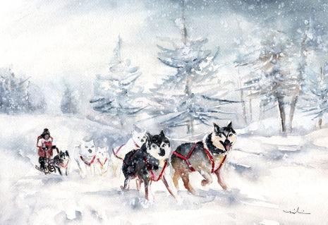Huskie-sledge-in-germany-m