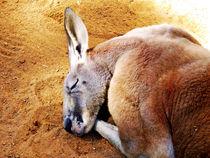 Sleepy Roo von Glen Mackenzie