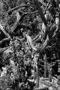 Cacti on St. John von Michael Whitaker