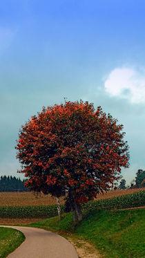 Sanft erröteter Baum | Landschaftsfotografie by Patrick Jobst