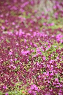 Bloomingtales