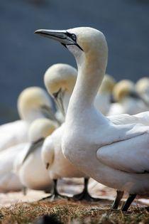 Birds by lisebonne