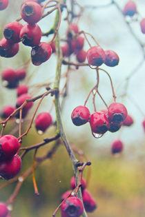 Wet-berries