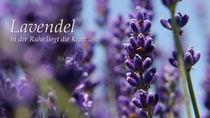 Lavendel von Thomas Haas