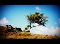 zerzauster Baum, Lighthouse Island, Mauritius by Sabine Howorka