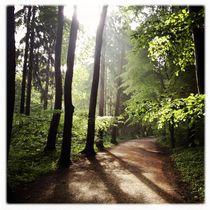 Wald by Maximilian Lips