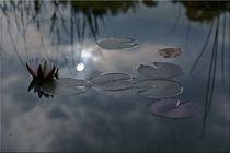 Seerosen-Mystik by lisa-glueck