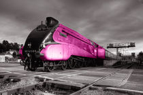 Pink Bittern  by Rob Hawkins