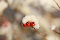 Früchte des Winters by Eckart  Mayer