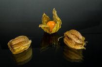 Trio Physalis von Erhard Hess