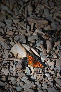 Schmetterling von Ralf Czekalla
