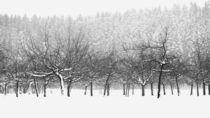 Der Schnee von  gestern... von Thomas Haas