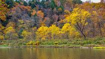 Three Yellow Trees by John Bailey
