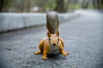 Squirrel by Dmitriy Sosna