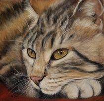 Lazy Cat by Christina Frenken