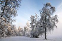 Winterwunderland von Bruno Schmidiger