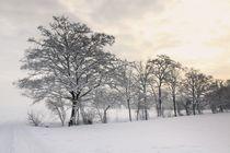 Bäume im Winter von Bruno Schmidiger