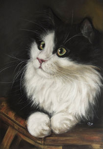 Langhaarkatze (Longhaired Cat) von Christina Frenken