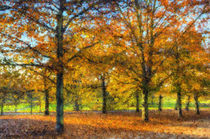 Greenwich Park Autumn Art von David Pyatt