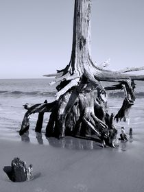 Tree Stump in The Sand by O.L.Sanders Photography