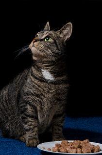 Katze abgelenkt von dominics