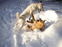Freundschaftskampf im Schnee von Marianne Drews