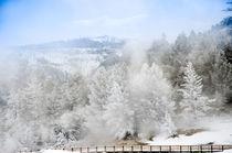 Winterwald mit Steg im Yellowstone von Marianne Drews