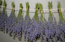 Lavendel zum Trocknen von Heike Nedo