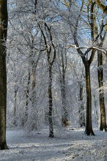 Snowy Beech Woods - II von David Tinsley
