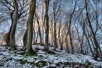 Twisted Beech by David Tinsley