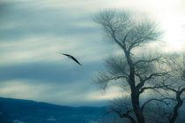 Der Flug des Adlers von Marianne Drews