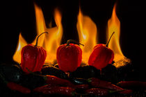 Chili & Habaneros - like fire by Jürgen Seibertz