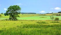 Northumberland-Idyll von gscheffbuch