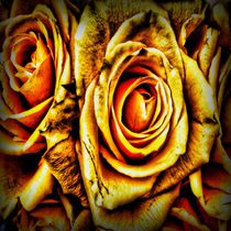 Golden Roses by Carmen Wolters