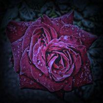 Purple Rose von Carmen Wolters