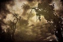 Tote Bäume von Christina Beyer