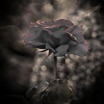 Dark Rose von Carmen Wolters