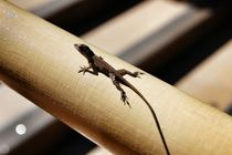 Gecko by Maria Killinger